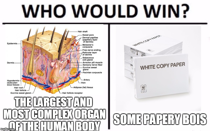 Who Would Win? Meme | SOME PAPERY BOIS THE LARGEST AND MOST COMPLEX ORGAN OF THE HUMAN BODY | image tagged in who would win | made w/ Imgflip meme maker