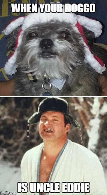 UNCLE EDDIE DOGGO | WHEN YOUR DOGGO IS UNCLE EDDIE | image tagged in christmas,xmas,christmas vacation,doggo,dog,uncle eddie | made w/ Imgflip meme maker