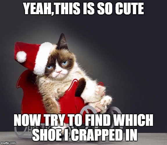 Grumpy Cat Christmas HD | YEAH,THIS IS SO CUTE NOW TRY TO FIND WHICH SHOE I CRAPPED IN | image tagged in grumpy cat christmas hd | made w/ Imgflip meme maker