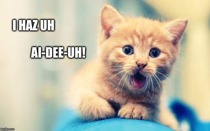 I HAZ UH AI-DEE-UH! | image tagged in surprised cat | made w/ Imgflip meme maker
