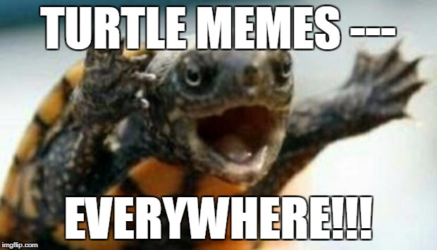 Turtle Say What? | TURTLE MEMES --- EVERYWHERE!!! | image tagged in turtle say what | made w/ Imgflip meme maker