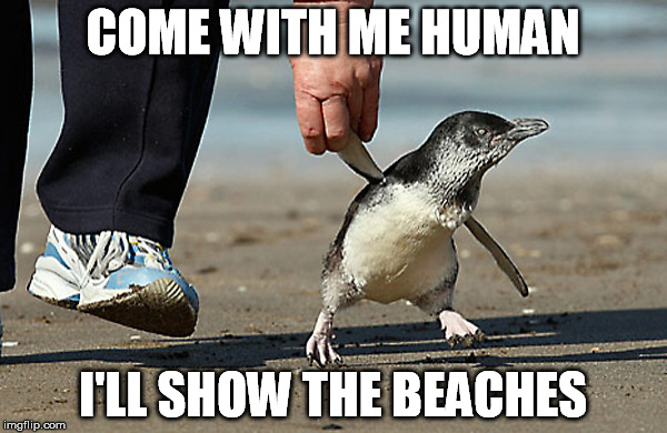COME WITH ME HUMAN I'LL SHOW THE BEACHES | made w/ Imgflip meme maker