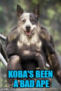 KOBA'S BEEN A BAD APE | made w/ Imgflip meme maker