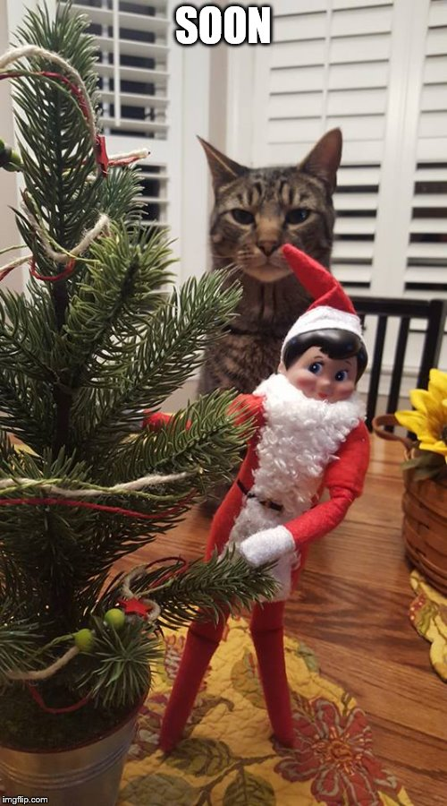 Elf on the Shelf being stalked | SOON | image tagged in elf on a shelf,cat,soon,stalking | made w/ Imgflip meme maker