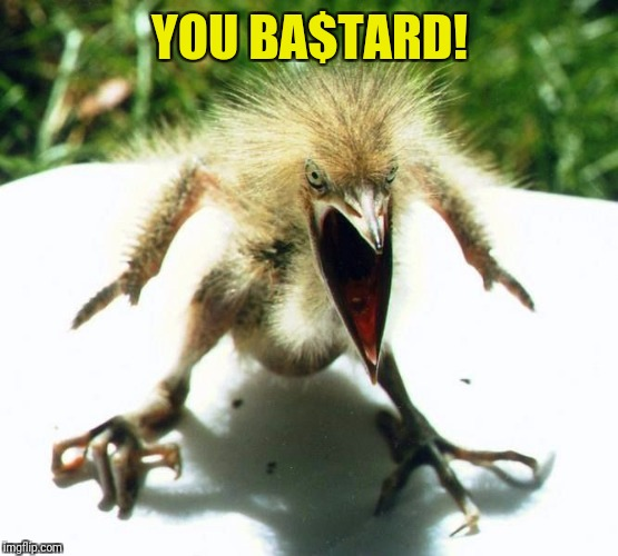 Unpleasant Bird | YOU BA$TARD! | image tagged in unpleasant bird | made w/ Imgflip meme maker