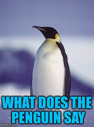 AmericanPenguin | WHAT DOES THE PENGUIN SAY | image tagged in americanpenguin | made w/ Imgflip meme maker