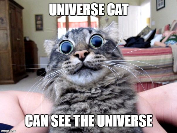 Universe cat | UNIVERSE CAT CAN SEE THE UNIVERSE | image tagged in universe cat,nipped,lolol | made w/ Imgflip meme maker