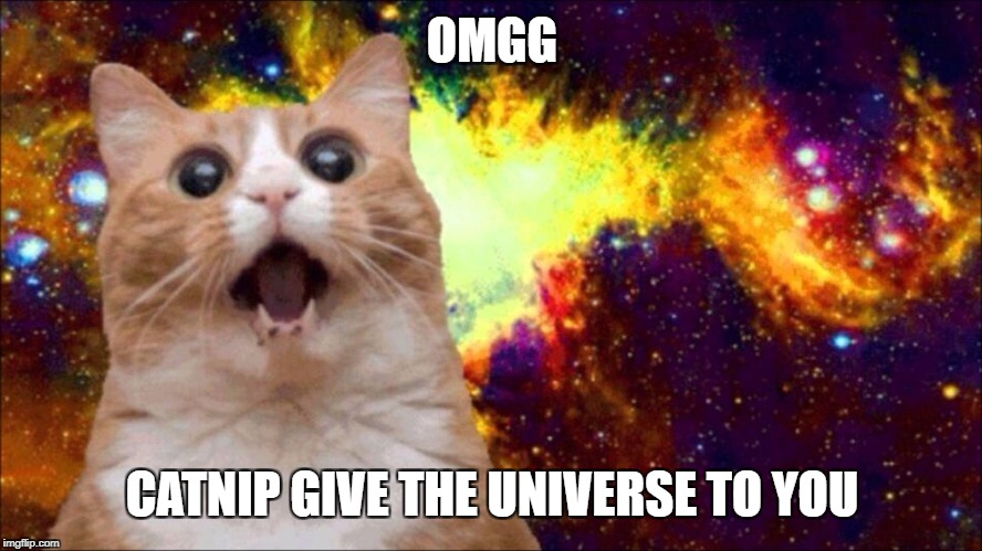 Catnip gives you the universe | OMGG CATNIP GIVE THE UNIVERSE TO YOU | image tagged in mlg cat,dogg,sup,universe | made w/ Imgflip meme maker