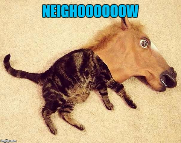 NEIGHOOOOOOW | made w/ Imgflip meme maker