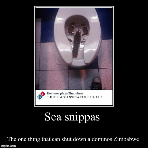 What. The. Heck. | Sea snippas | The one thing that can shut down a dominos Zimbabwe | image tagged in funny,demotivationals | made w/ Imgflip demotivational maker