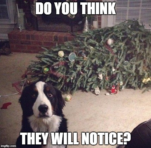 Dog Christmas Tree | DO YOU THINK THEY WILL NOTICE? | image tagged in dog christmas tree | made w/ Imgflip meme maker