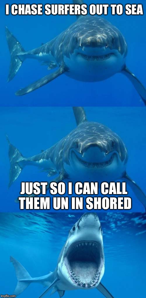 Bad Shark Pun  | I CHASE SURFERS OUT TO SEA JUST SO I CAN CALL THEM UN IN SHORED | image tagged in bad shark pun,memes | made w/ Imgflip meme maker