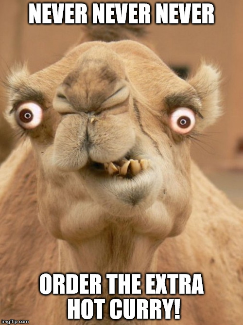 camel | NEVER NEVER NEVER ORDER THE EXTRA HOT CURRY! | image tagged in camel | made w/ Imgflip meme maker