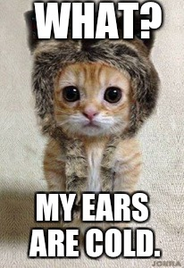 WHAT? MY EARS ARE COLD. | image tagged in cute kitten,cute,kitten,funny kitten | made w/ Imgflip meme maker