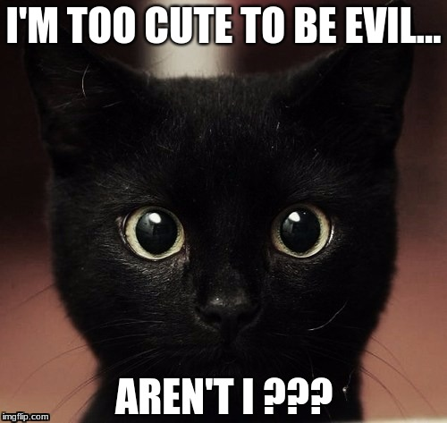 I'M TOO CUTE TO BE EVIL... AREN'T I ??? | image tagged in black cat,black cat evil,black cat meme,black,cat,meme | made w/ Imgflip meme maker