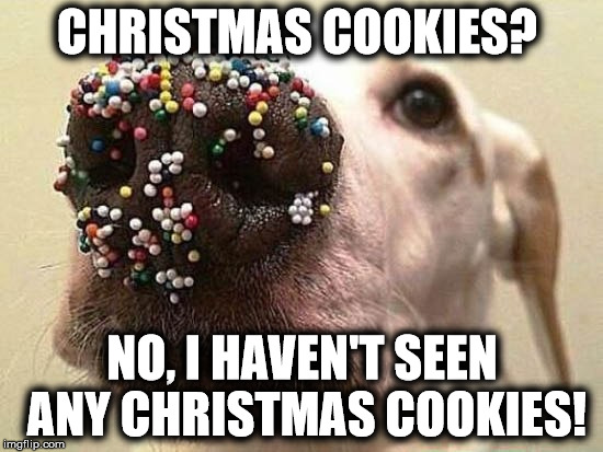 CHRISTMAS COOKIES? NO, I HAVEN'T SEEN ANY CHRISTMAS COOKIES! | image tagged in dog | made w/ Imgflip meme maker