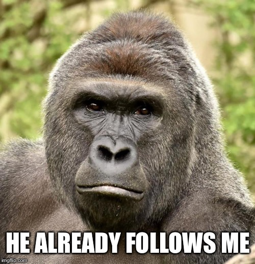 Har | HE ALREADY FOLLOWS ME | image tagged in har | made w/ Imgflip meme maker