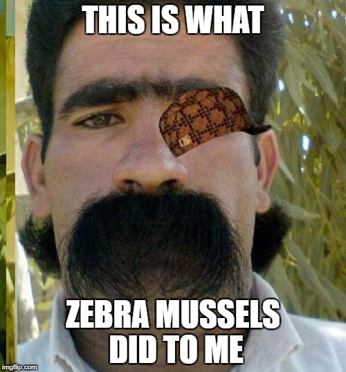 THIS IS WHAT ZEBRA MUSSELS DID TO ME | image tagged in moustache,scumbag | made w/ Imgflip meme maker