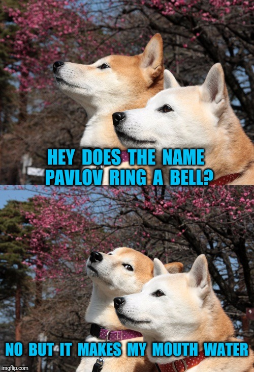 Bad pun dogs | HEY  DOES  THE  NAME  PAVLOV  RING  A  BELL? NO  BUT  IT  MAKES  MY  MOUTH  WATER | image tagged in bad pun dogs,psychology | made w/ Imgflip meme maker