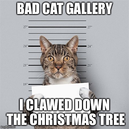 BAD CAT GALLERY I CLAWED DOWN THE CHRISTMAS TREE | image tagged in cat mug shot | made w/ Imgflip meme maker