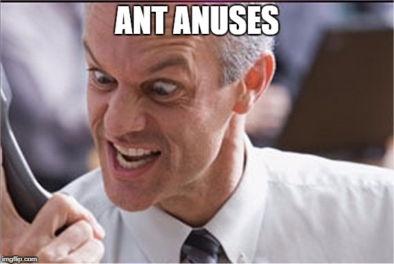 Rining | ANT ANUSES | image tagged in rining | made w/ Imgflip meme maker