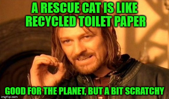Rescue cats |  A RESCUE CAT IS LIKE RECYCLED TOILET PAPER; GOOD FOR THE PLANET, BUT A BIT SCRATCHY | image tagged in memes,one does not simply,cats,animal rescue,toilet paper,recycling | made w/ Imgflip meme maker