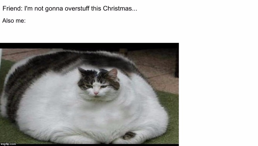 When your friends are on a diet... | image tagged in cat,fat cat,christmas,thanksgiving,funny fat cat | made w/ Imgflip meme maker