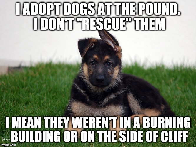 "I love my german shepherds | I ADOPT DOGS AT THE POUND. I DON'T ""RESCUE"" THEM I MEAN THEY WEREN'T IN A BURNING BUILDING OR ON THE SIDE OF CLIFF 