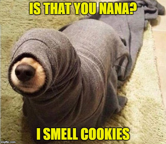 not circumcised  | IS THAT YOU NANA? I SMELL COOKIES | image tagged in not circumcised | made w/ Imgflip meme maker
