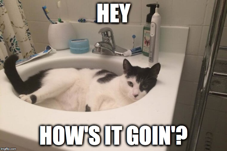 Kitty In The Sink | HEY HOW'S IT GOIN'? | image tagged in howdy | made w/ Imgflip meme maker