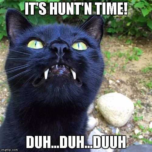 Vampire Cat | IT'S HUNT'N TIME! DUH...DUH...DUUH | image tagged in vampire,cat,funny,memes,halloween,creepy | made w/ Imgflip meme maker