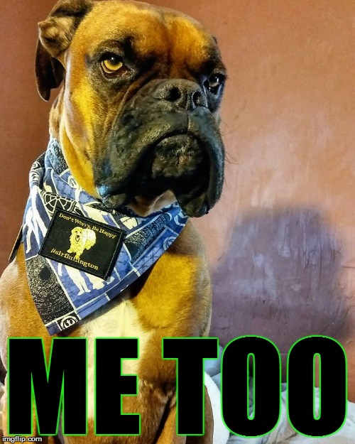 Grumpy Dog | ME TOO | image tagged in grumpy dog | made w/ Imgflip meme maker