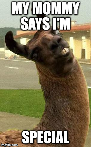 llama | MY MOMMY SAYS I'M SPECIAL | image tagged in llama | made w/ Imgflip meme maker