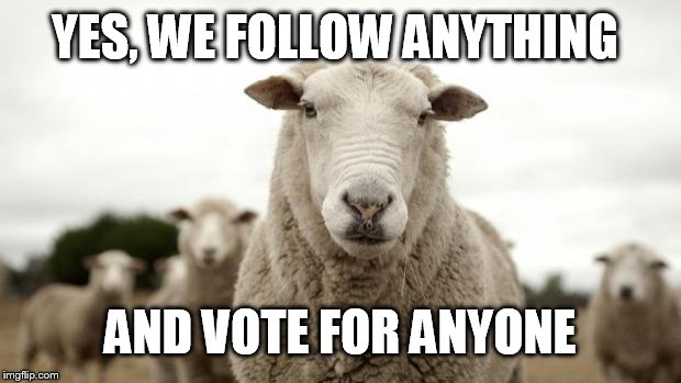 Sheep | YES, WE FOLLOW ANYTHING AND VOTE FOR ANYONE | image tagged in sheep | made w/ Imgflip meme maker
