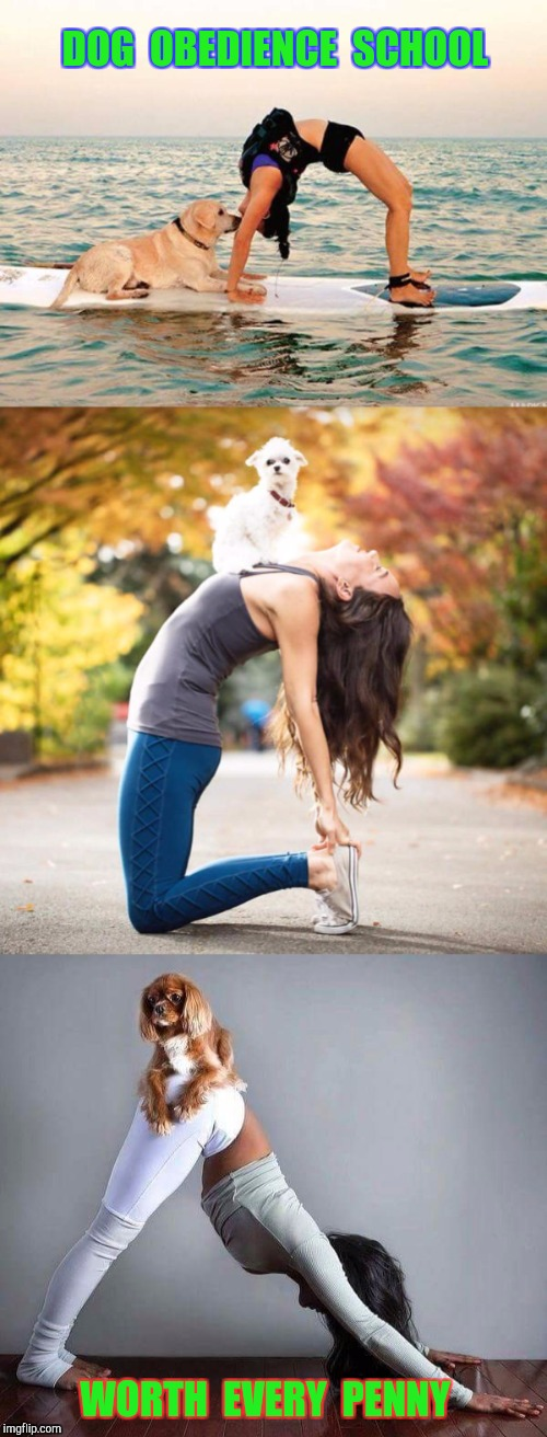 Sit!  Stay!  Good Girl! | DOG  OBEDIENCE  SCHOOL WORTH  EVERY  PENNY | image tagged in memes,funny memes,yoga,funny dog memes | made w/ Imgflip meme maker