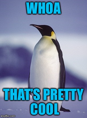 AmericanPenguin | WHOA THAT'S PRETTY COOL | image tagged in americanpenguin | made w/ Imgflip meme maker