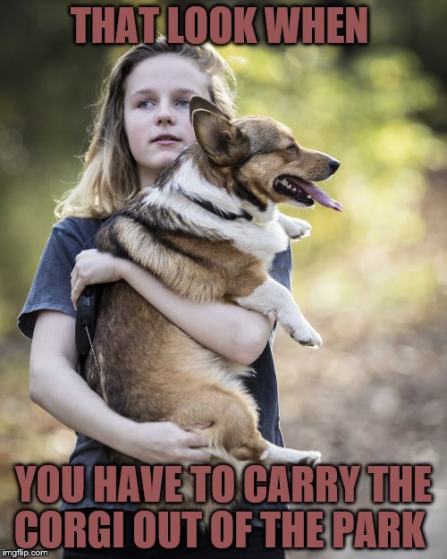 THAT LOOK WHEN YOU HAVE TO CARRY THE CORGI OUT OF THE PARK | image tagged in that look | made w/ Imgflip meme maker