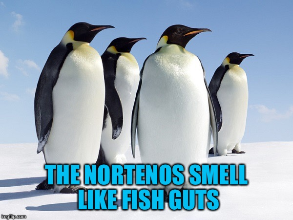 Group of Penguins | THE NORTENOS SMELL LIKE FISH GUTS | image tagged in group of penguins | made w/ Imgflip meme maker
