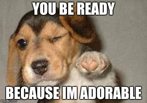 puppy | YOU BE READY BECAUSE IM ADORABLE | image tagged in puppy | made w/ Imgflip meme maker