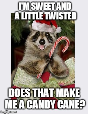 Ho, Ho. Ho... | I'M SWEET AND A LITTLE TWISTED DOES THAT MAKE ME A CANDY CANE? | image tagged in christmas meme,christmas,raccoon | made w/ Imgflip meme maker