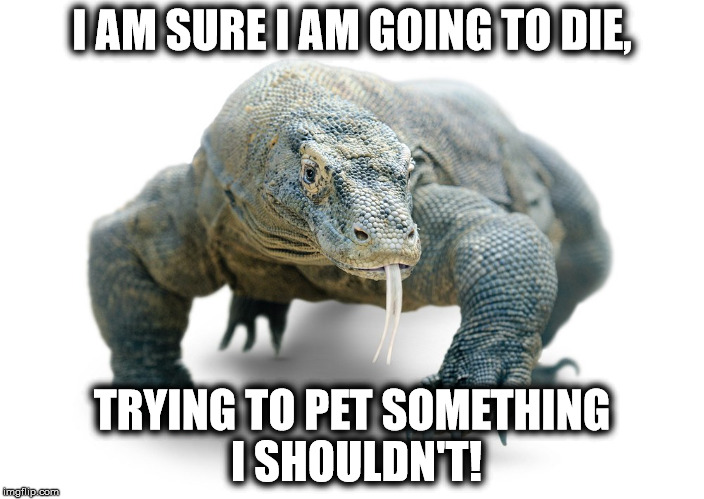 I AM SURE I AM GOING TO DIE, TRYING TO PET SOMETHING I SHOULDN'T! | image tagged in dragon | made w/ Imgflip meme maker