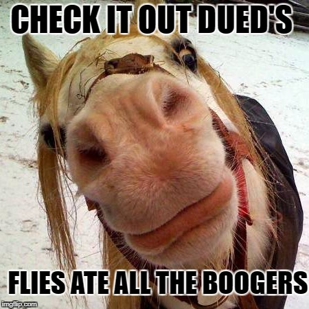 Check it out ! | CHECK IT OUT DUED'S FLIES ATE ALL THE BOOGERS | image tagged in funny animals | made w/ Imgflip meme maker