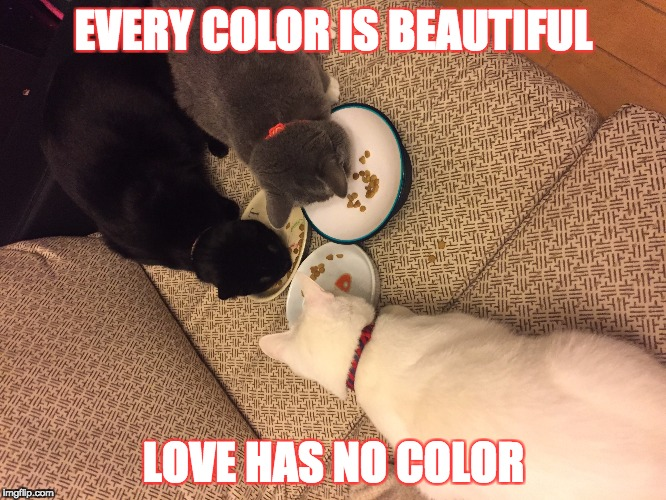 EVERY COLOR IS BEAUTIFUL LOVE HAS NO COLOR | image tagged in cat | made w/ Imgflip meme maker