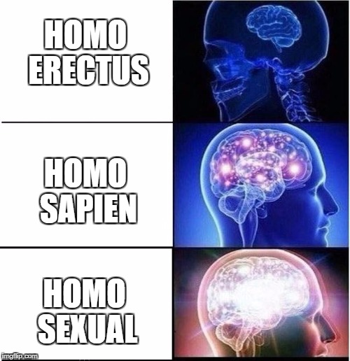 Human Evolution | HOMO ERECTUS HOMO SEXUAL HOMO SAPIEN | image tagged in expanding brain,memes,evolution,gay,homo | made w/ Imgflip meme maker