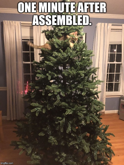ONE MINUTE AFTER ASSEMBLED. | image tagged in kitty in christmas tree | made w/ Imgflip meme maker