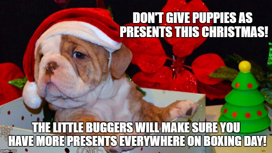 Xmas Bomber | DON'T GIVE PUPPIES AS PRESENTS THIS CHRISTMAS! THE LITTLE BUGGERS WILL MAKE SURE YOU HAVE MORE PRESENTS EVERYWHERE ON BOXING DAY! | image tagged in christmas,xmas,puppy,bomb,poop,present | made w/ Imgflip meme maker