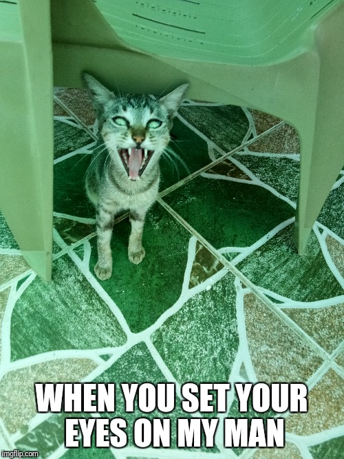 rawr | WHEN YOU SET YOUR EYES ON MY MAN | image tagged in cats,funny cats,funny cat memes,meow,meowstic | made w/ Imgflip meme maker
