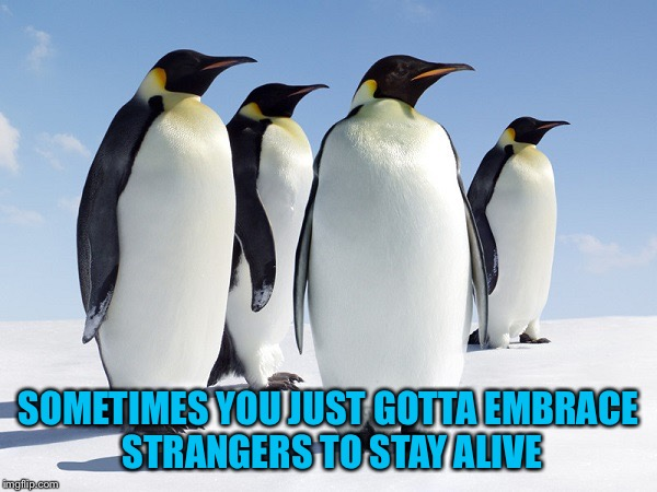 Group of Penguins | SOMETIMES YOU JUST GOTTA EMBRACE STRANGERS TO STAY ALIVE | image tagged in group of penguins | made w/ Imgflip meme maker