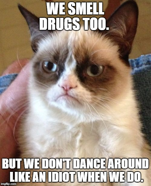 Drug cats rule | WE SMELL DRUGS TOO. BUT WE DON'T DANCE AROUND LIKE AN IDIOT WHEN WE DO. | image tagged in memes,grumpy cat,drugs,funny | made w/ Imgflip meme maker