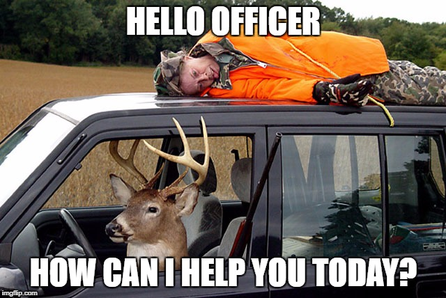 Deer hunting humans | HELLO OFFICER HOW CAN I HELP YOU TODAY? | image tagged in deer hunting humans,funny,memes,hunting,pulled over,akward | made w/ Imgflip meme maker